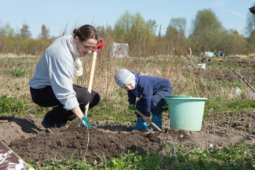 POTIPÕLLUNDUSE VÕIDUKÄIK: Tartu paneellinnakust üle tee laiub suur mahepõllumaa