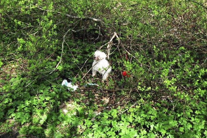 Julmur sidus koera kinni ning jättis võpsikusse surema