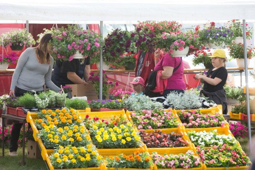 GALERII | Türi lillelaat: kes kaupleb vaikselt koduukse ees, kes keset laadamelu