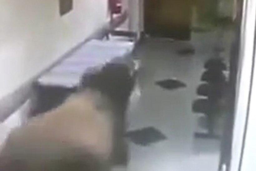 TURVAKAAMERA VIDEO: haigla töötajad põgenesid koridoris jooksva härja eest