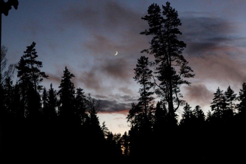 HIRMUS ÖÖ: väidetav kummitus pani matkajad öisest metsast kabuhirmus põgenema