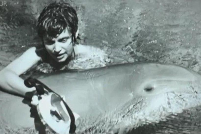 NASA rahastatud projekti raames delfiiniga seksinud naine: see oli kaunis ja õrn