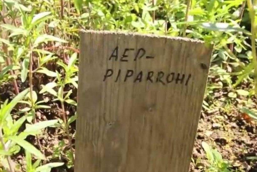 VIDEO: retk Süvahavva loodustalu ürdiaeda
