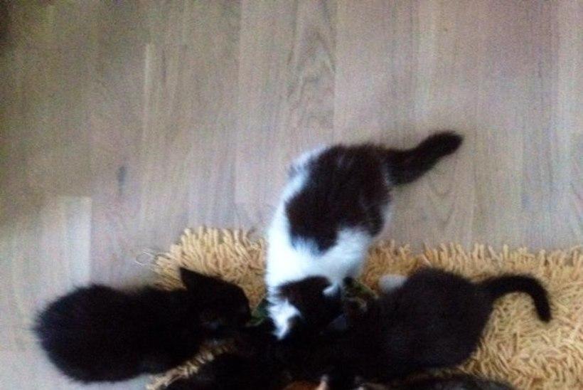 Kertu Jukkum võttis endale 10 kassi!
