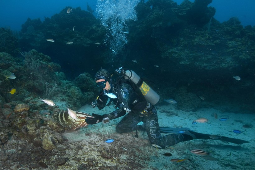 ARMSAD FOTOD: sukelduja sattus vee all kokku kalaga, kes tahtis kallistusi ja musisid