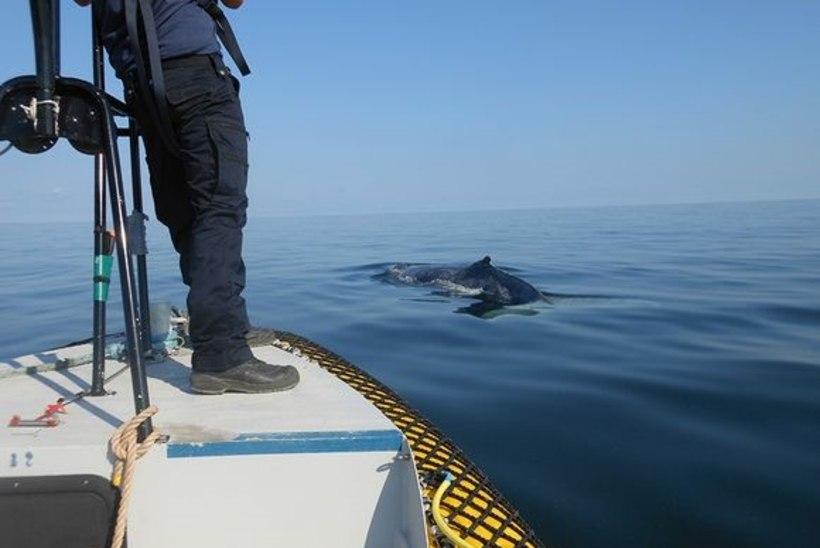 Läänemeres märgati vaala