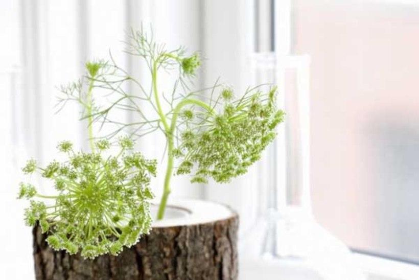Vana aiapuu uus elu