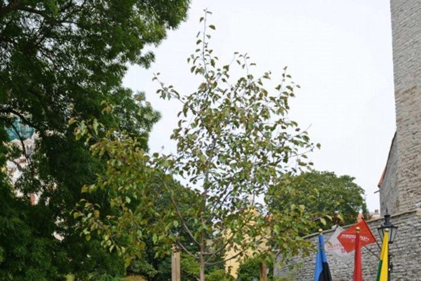 FOTOD: Eiki Nestor istutas Balti ühtsuse puu