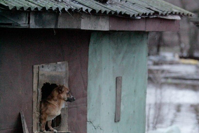 Jaak Kilmi: veetsin terve aasta Riias džunglisaarel