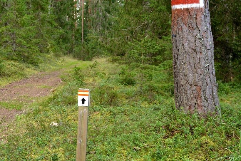 Avasta Eestimaad: kust alustada oma metsamatkaja karjääri?