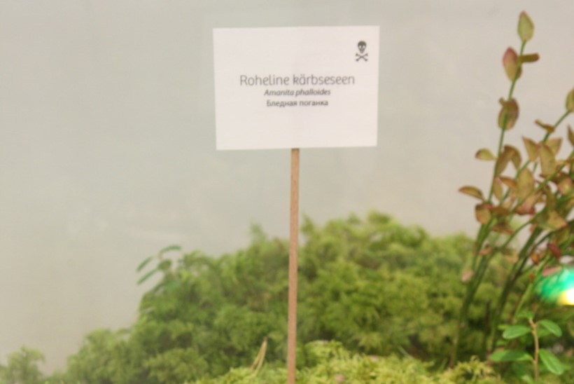 Seenemetsas võivad varitseda petupaarid