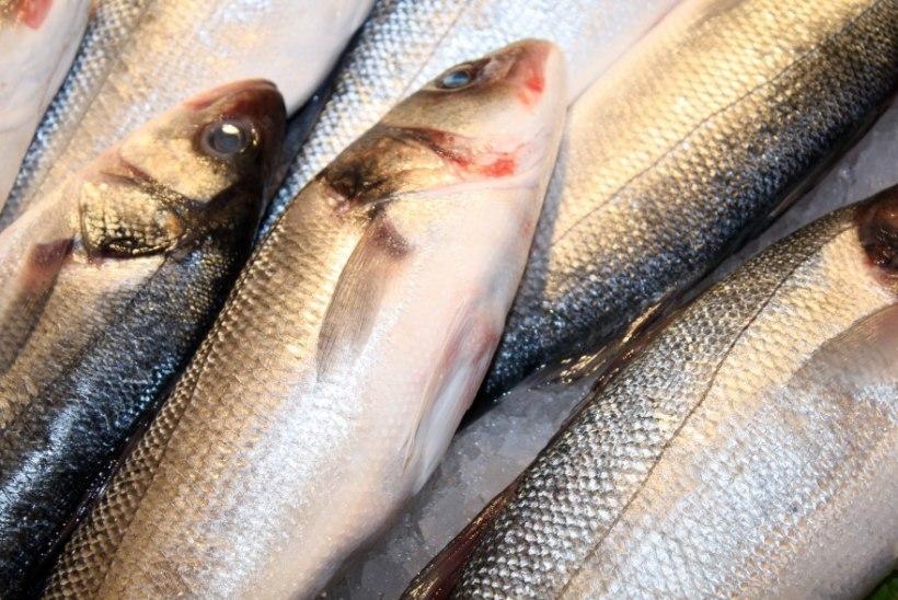 Säästunipid liha ja kala ostmiseks
