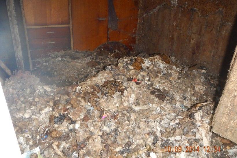 Koerajunne täis korter saab viimaks koristatud