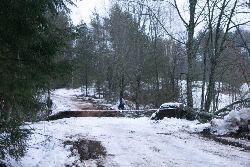 FOTOD: Tsimmi paisjärve veed murdsid tammist läbi ja lõhkusid tee