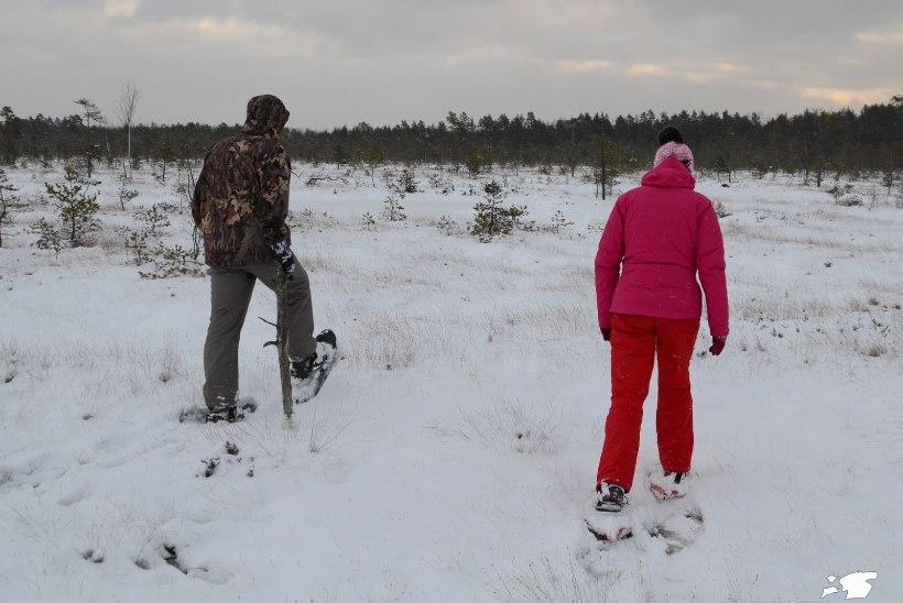 Avasta Eestimaad: räätsadega mitmeks päevaks rabaavarustele