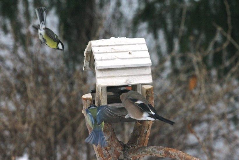 """Kuhu on kadunud aialinnud? Ornitoloog: """"Nad lihtsalt ei ole veel tulnud abi küsima."""""""