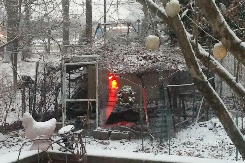 Lumi alistas New Yorgi
