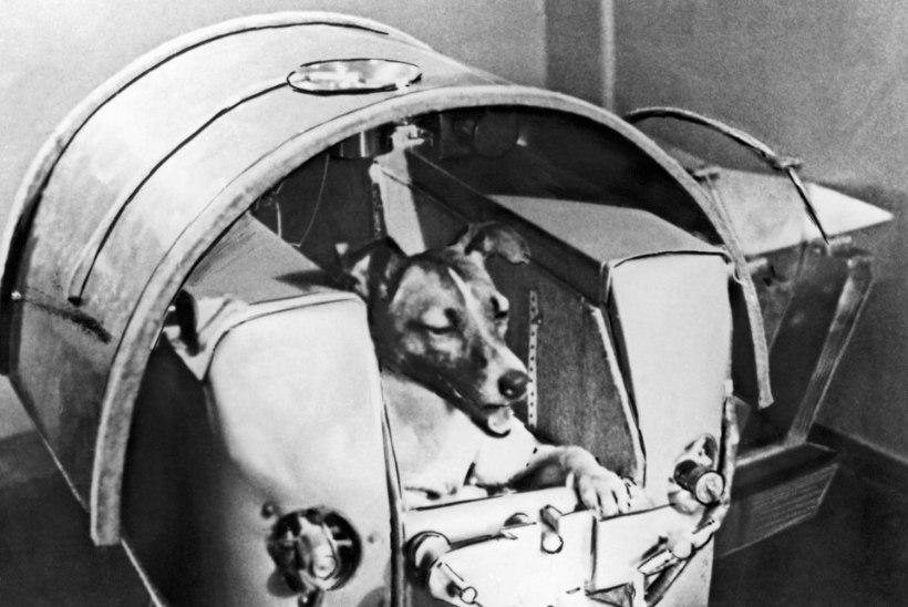 Laika, Belka ja Strelka – krantsid, kes aitasid inimese kosmosesse