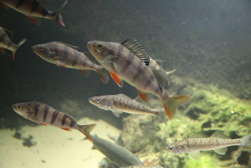 Kalale! jaanuarinumber keskendub talvisele kalapüügile
