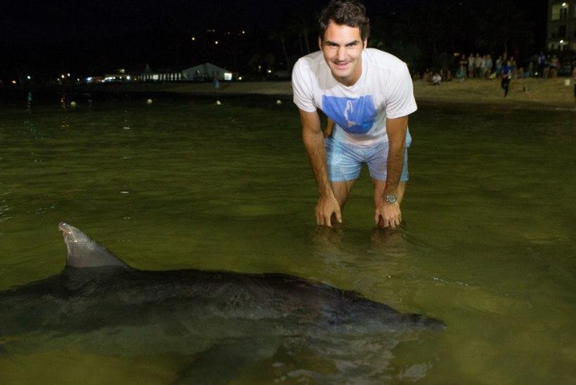 VIDEO: koaalad on pehmodele! Vaata, mis elukatega lustis Austraalias Roger Federer!