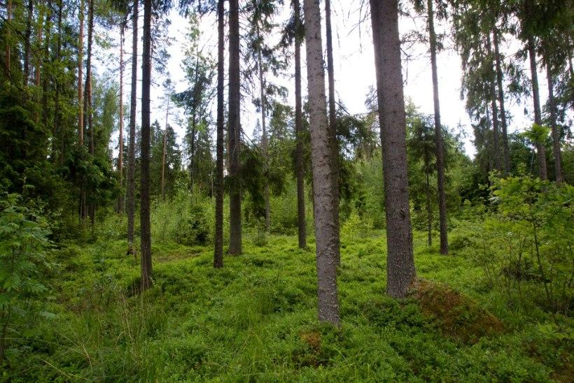 Traktoriga seenele läinud mees leiti metsaservast surnuna