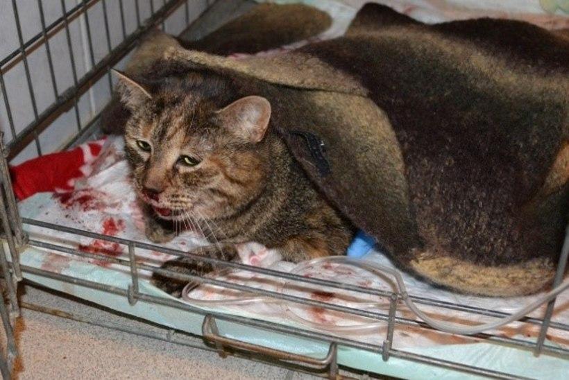SÜNNIPÄEVAPEO VÕIGAS LÕPP: purjus teismeline solvus ja viskas kassi kuuendalt korruselt surnuks
