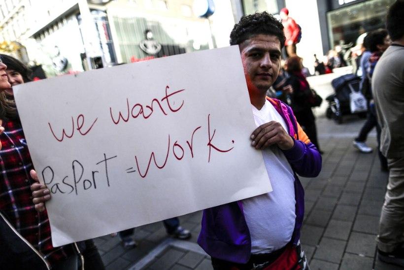 Saaremaa tehas ootab töökaid pagulasi