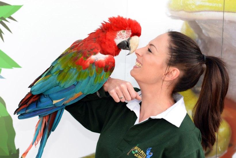PILDID | Pirtsakas vanadaam: 90-aastane filmitähest papagoi ei viitsi enam lennata