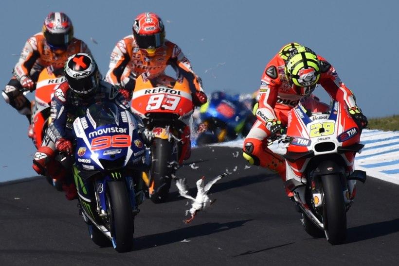 NUKKER VIDEO ja FOTOD | Mis juhtub, kui kajakas sattub MotoGP võistlusrajale