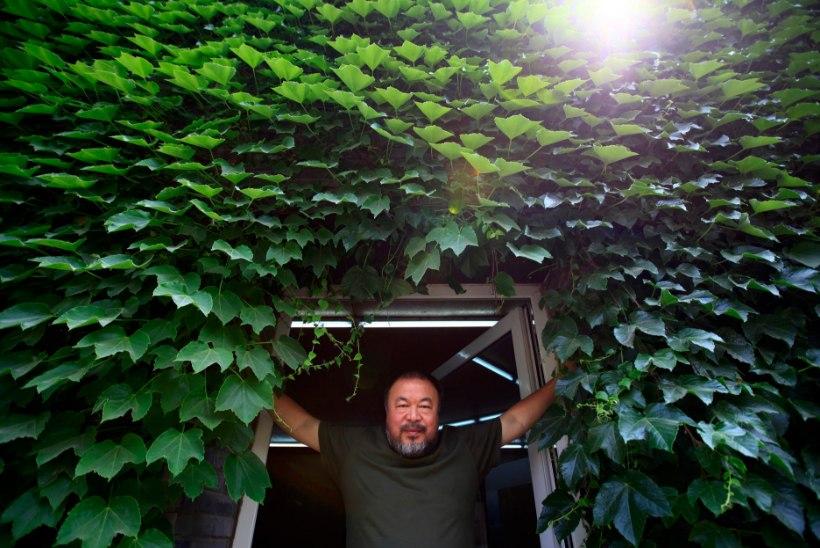 Suured nimed Helsingis: Cartier-Bresson Ateneumis, Ai Weiwei HAM-is