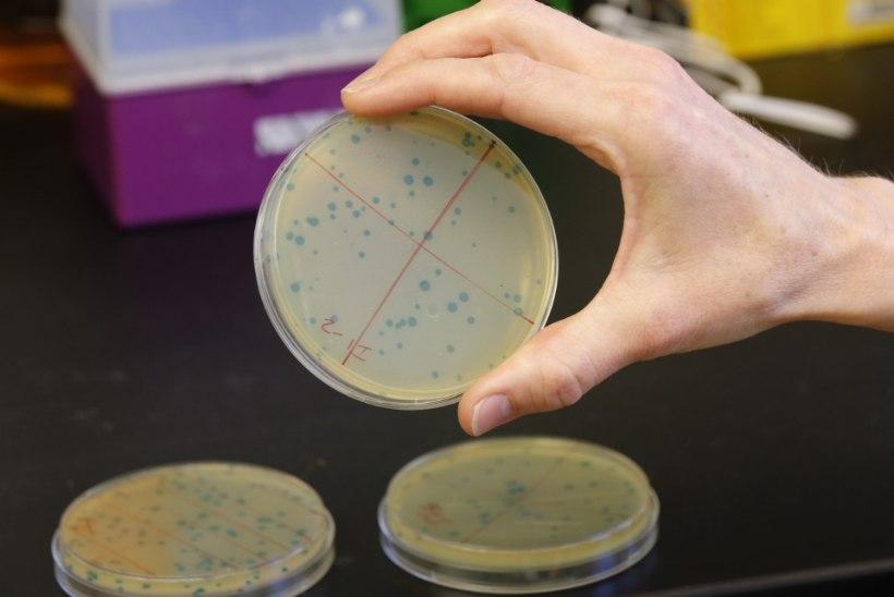 KAS NII SAAVUTATAKSE IGAVENE ELU? Vene teadlane süstib endale miljonite aastate vanuseid baktereid