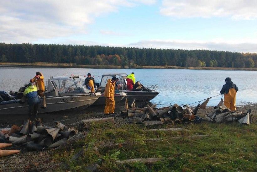 Inspektorid eemaldasid Narva jõest ligi 2000 peremeheta silmutorbikut