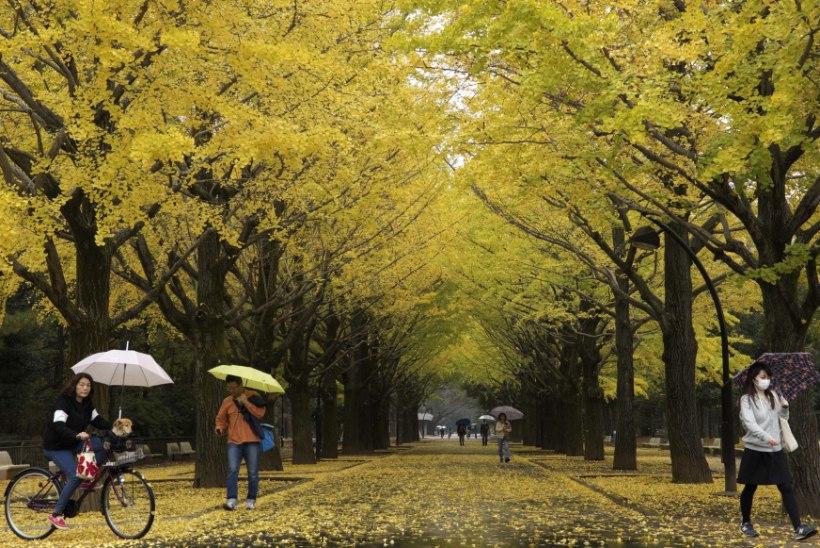 TALV LÄHENEB: sel nädalal saab vihma, lörtsi ja tunda tugevat tuult