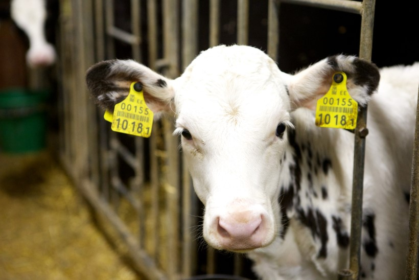 Lehmad ja sead on märgistatud ja teada, aga 34000 noort on teab kuhu kadunud