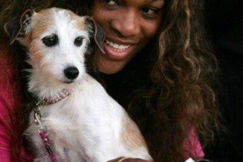VIDEO   Pisarates Serena pidi elu armastusega hüvasti jätma