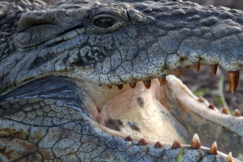 KARMID MEETMED: Indoneesias hakkavad narkokurjategijaid valvama krokodillid