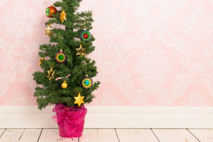 7 vajalikku nõuannet potijõulupuu eest hoolitsemiseks