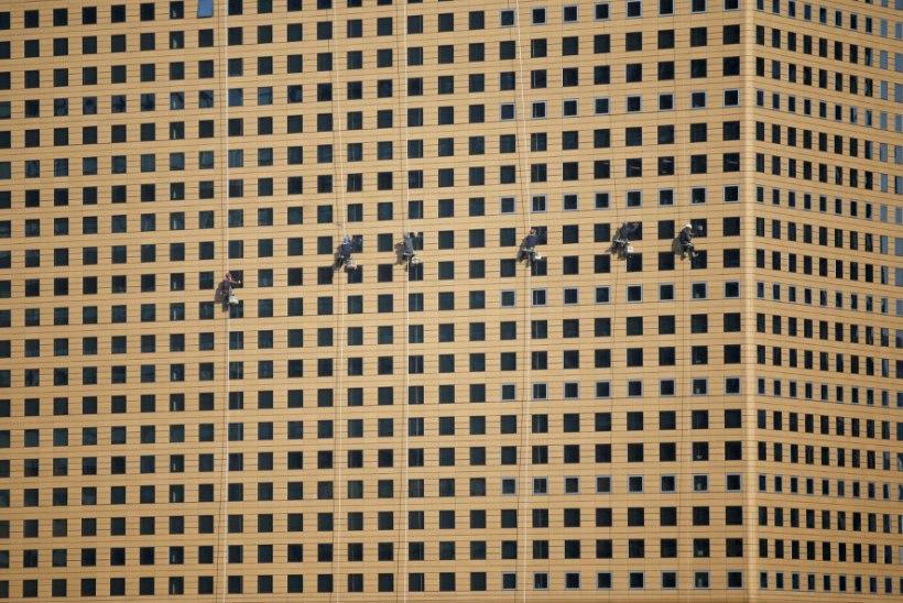 PILTUUDIS   Aknapesijad kümnete meetrite kõrgusel kui väiksed putukad