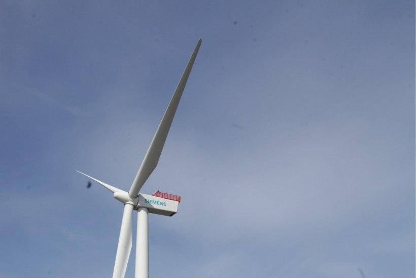Vennad Sõnajalad: tuulikutetööstus võib Eestisse luua 1500 uut töökohta