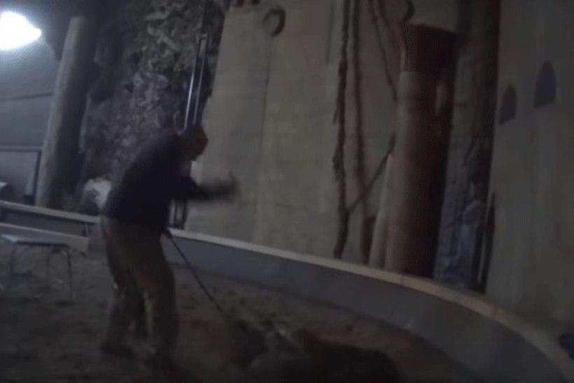 """KOHUTAV VIDEO! Filmis """"Pi elu"""" osalenud tiigrit taltsutanud mees tabati julmalt looma peksmas"""