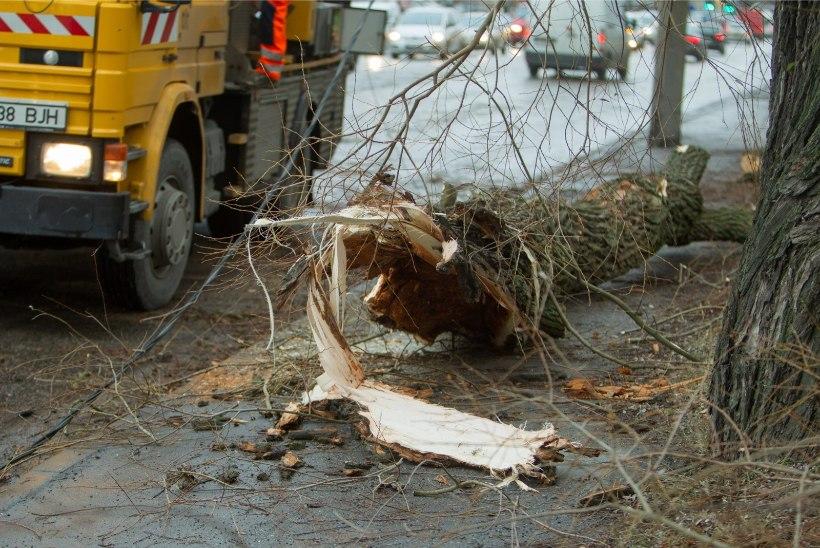 PÄÄSTEAMET HOIATAB: tormi ajal tasub olla ettevaatlik!