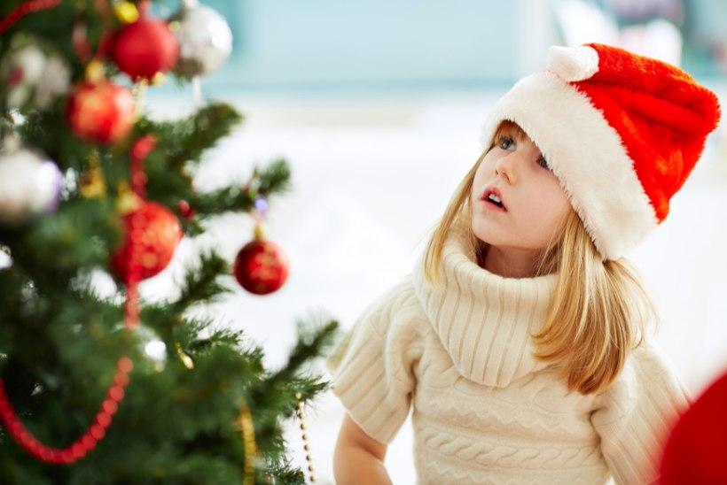ARMSAIM ON ISETOODUD KUUSK: leia jõulupuu riigimetsast