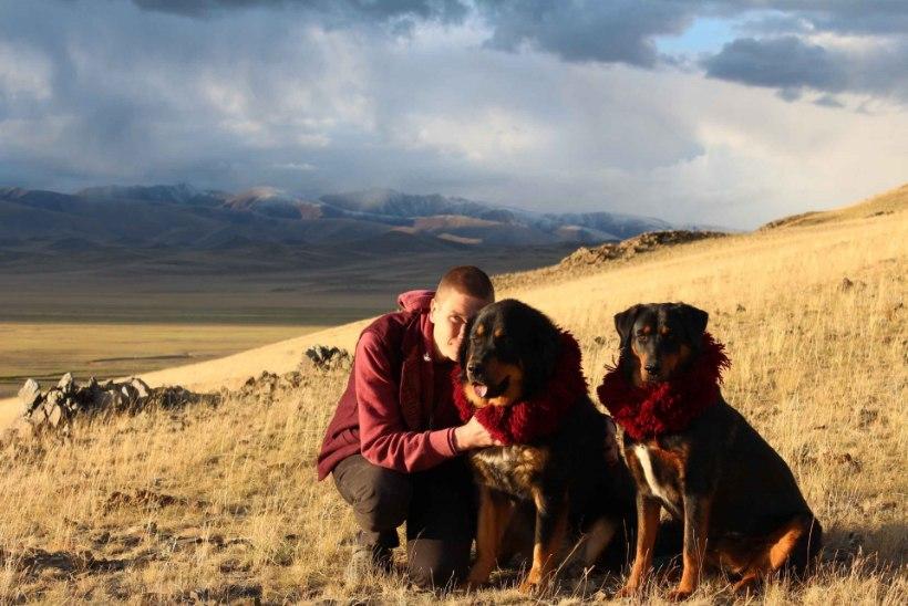 """""""Tiibeti mastifid pole näitusemõmmid, nad on ohtlikud relvad!"""""""