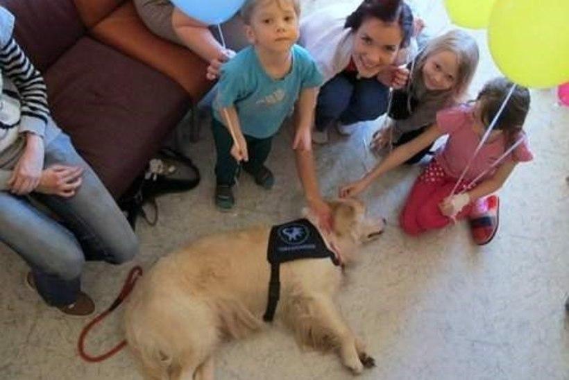 Teraapiakoer Ellie hakkab Tartu lastehaiglas igal nädalal pisikesi patsiente rõõmustama