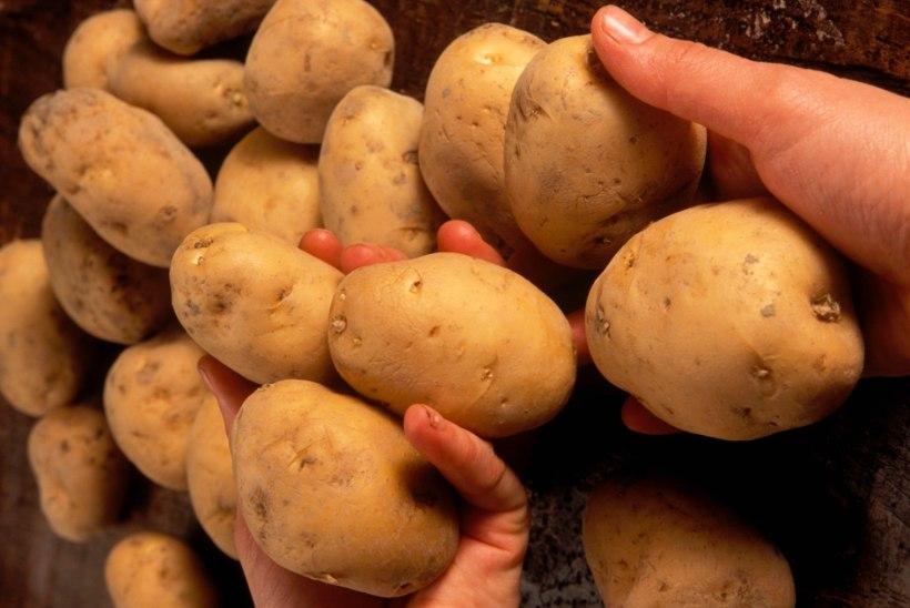 Ja uueks iluhitiks on .... kartulid!?!
