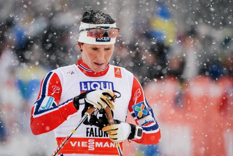 FALUNI MM | Poola suusatreener ebaõnnestunud Marit Björgenist: naersin tema eesmärke kuuldes nii kõvasti, et pisarad hakkasid voolama!