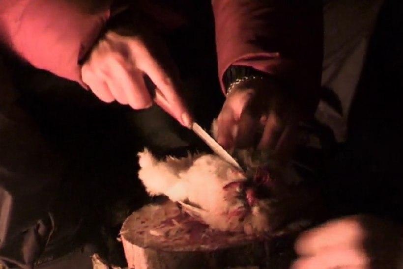 """Loomakaitsjad taunivad TV3 sarjas """"Looduslik valik"""" toimunud vuttide tapmist"""