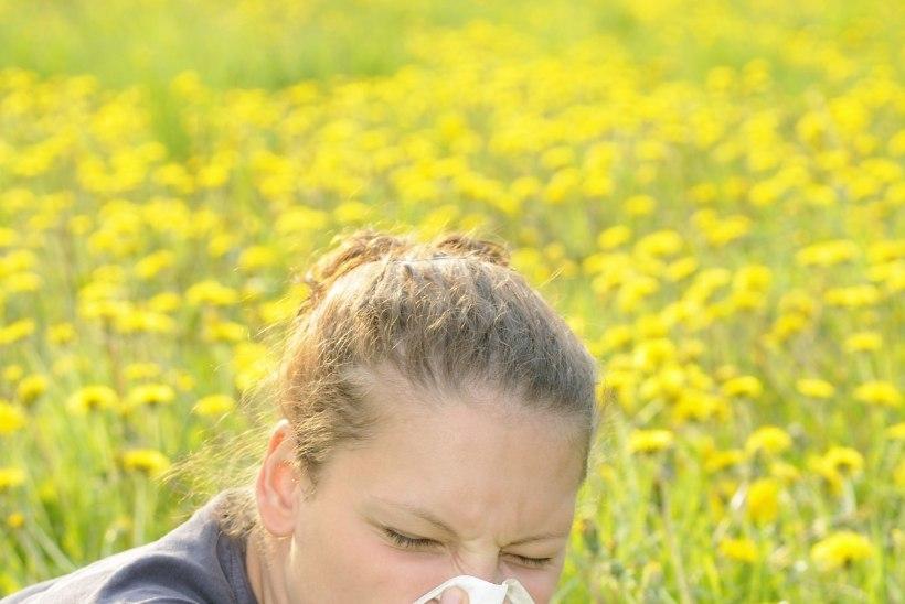 Kevad paiskab õietolmu õhku: kui kahtlustad endal allergiat, otsi esmalt abi apteegist