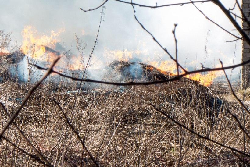 Saaremaal põles karjalaudas katuseroog