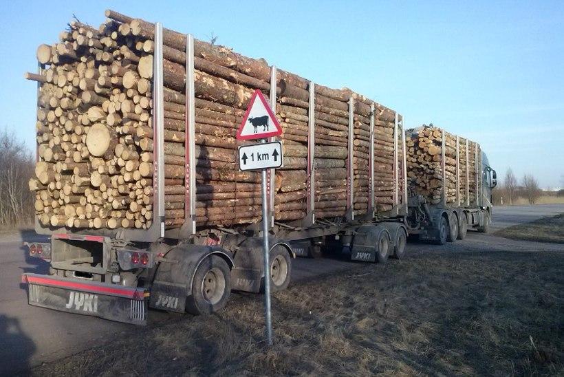 Pärnus peeti kinni lubatust lausa 31 tonni raskem metsaveok